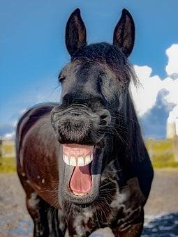 horse-1844792__340.jpg