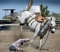 rodeo-1010051__180.jpg